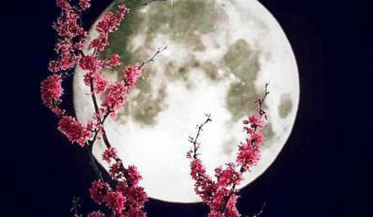 Pink Full Moon In Scorpio