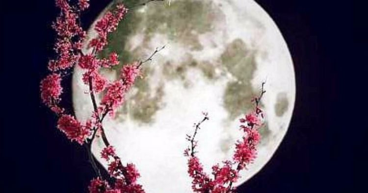 Flower Full Moon in Sagittarius